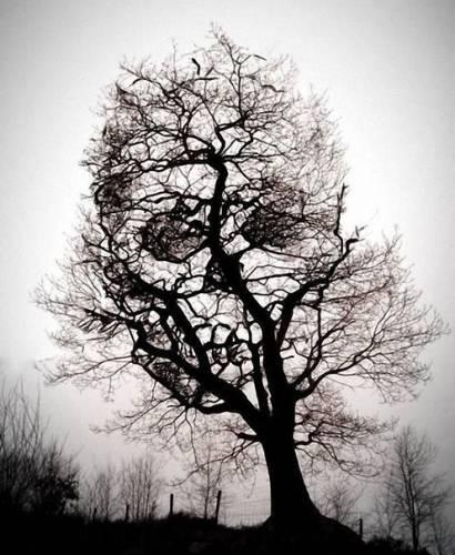 Образ черепа на высохшем дереве